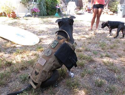 z Pro-Arms Tactical Dog Vest - Black / Large